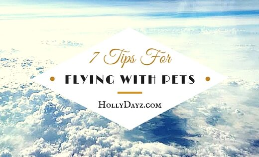 7-Tips-For flying with pets ©hollydayz