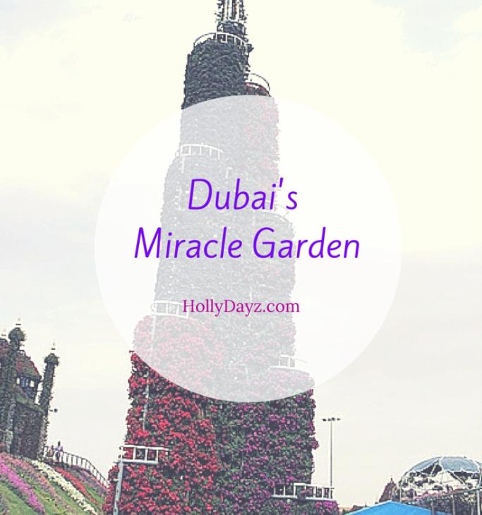 dubais miracle garden © hollydayz